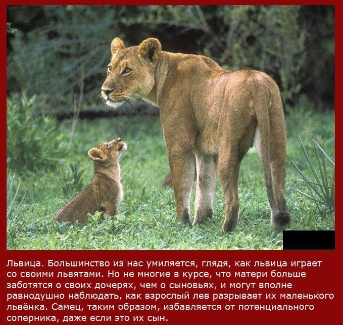 и видео про животных