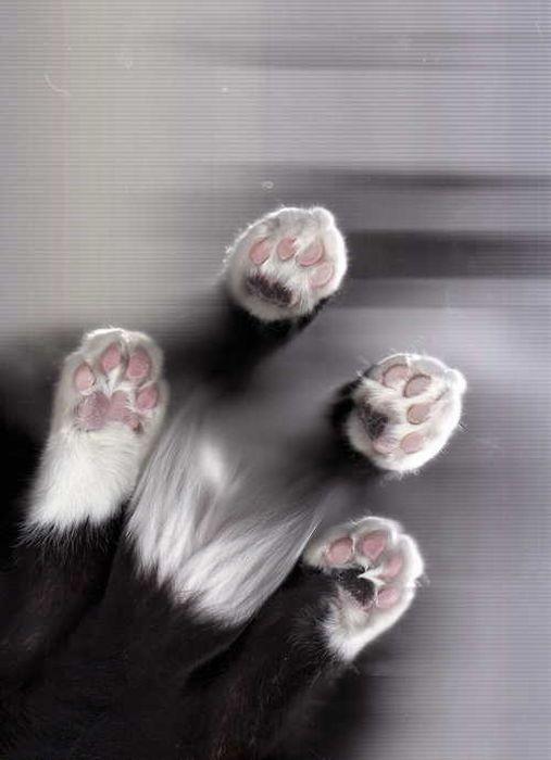 Кошки попавшие на сканер (32 фото)
