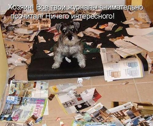 Картинки с забавными надписями (30 фото)