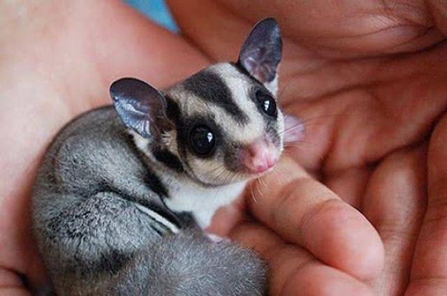14 incredibly exotic pets that you can own right now