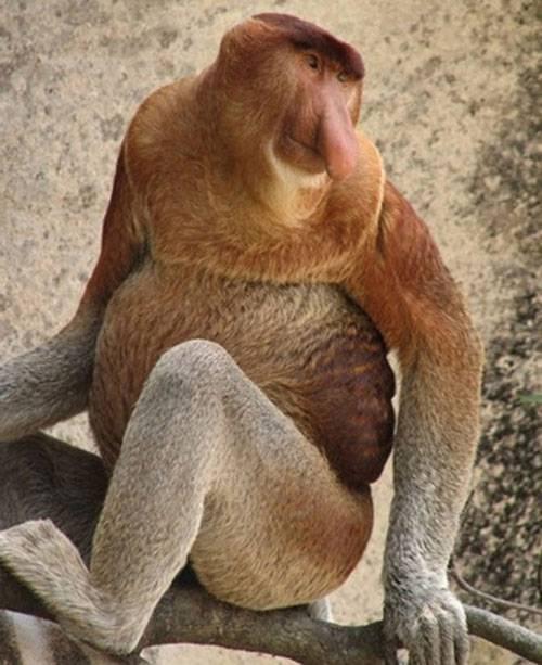 Самые невероятные, страшные и прикольные животные мира (44 фото)
