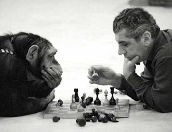 Между человеком и шимпанзе 9 фото