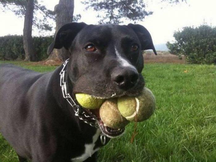 Смешные собаки 110 фото