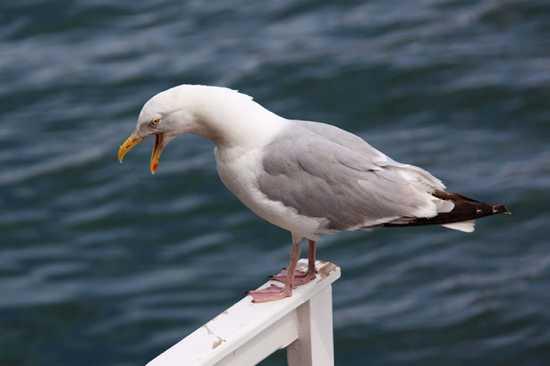 10 птиц, которых стоит опасаться (10 фото)