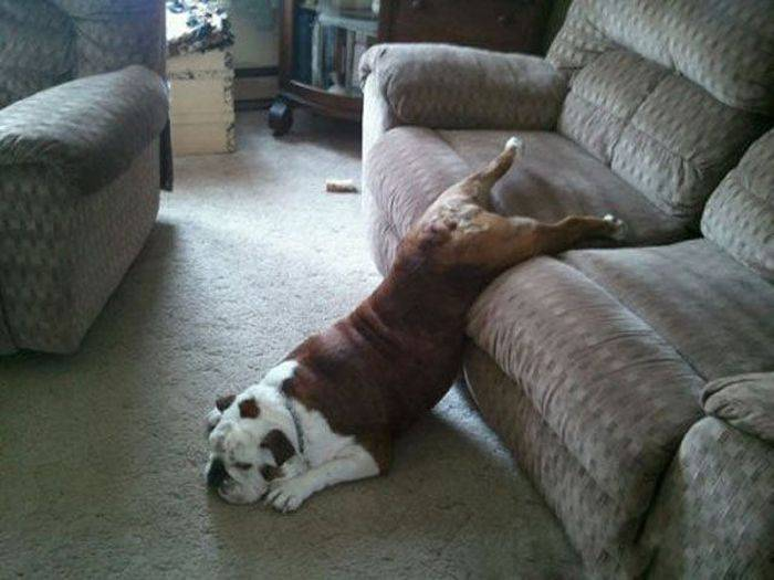 ленивые люди фото
