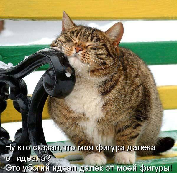 Забавные коты в картинках с надписями <u>лучшие статусы в картинках с надписями</u> (39 фото)
