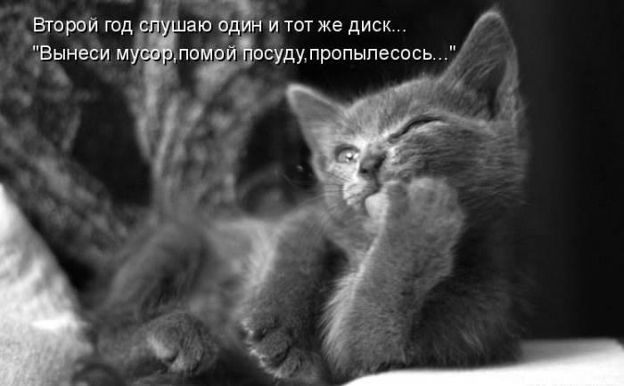 Забавные коты в картинках с надписями (39 фото)