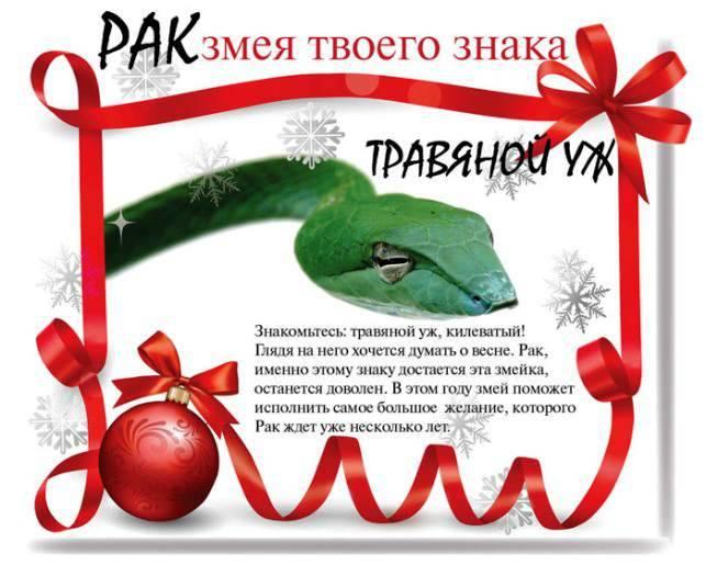 змея под знаком весы рожденная 25 сентября