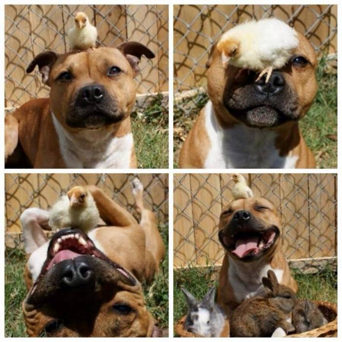 Slatke i smiješne životinje