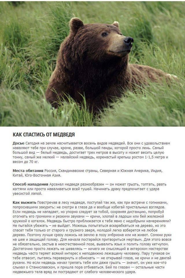 на каком рисунке поза медведя самая страшная для человека при встреч
