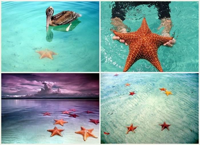 Пляж морских звезд (18 фото)