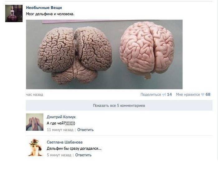 Прикольные и смешные комментарии из социальных сетей (30 фото)