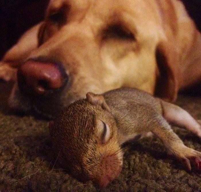 Smiješne i slatke životinje (31 fotografija)