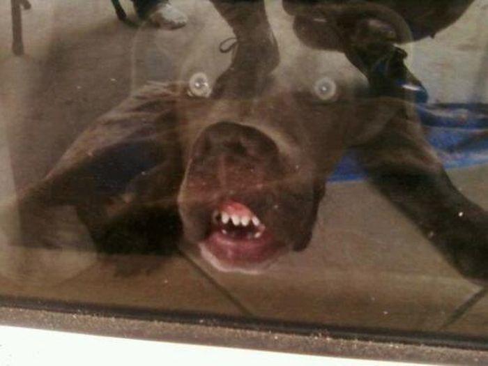 Смешные собаки 24 фото