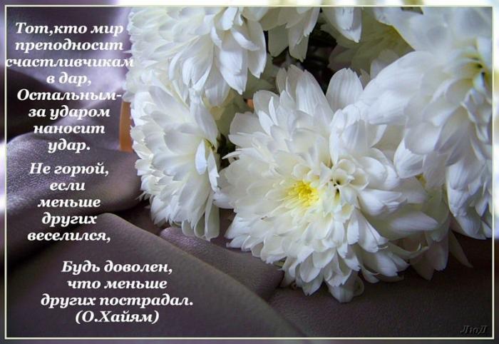 Я хризантема стих