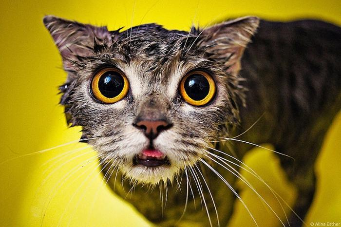 Mokre mačke (15 fotografija)