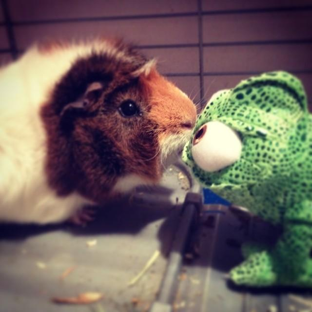 Slatke i smiješne životinje (30 fotografija)