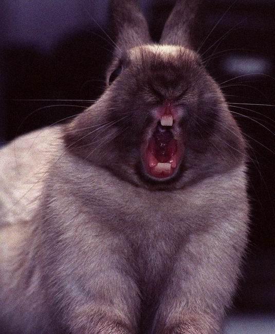 фото животные кричат