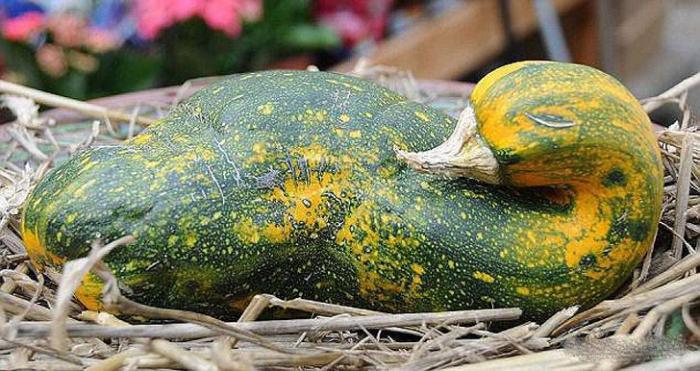 Čudno povrće (15 fotografija)