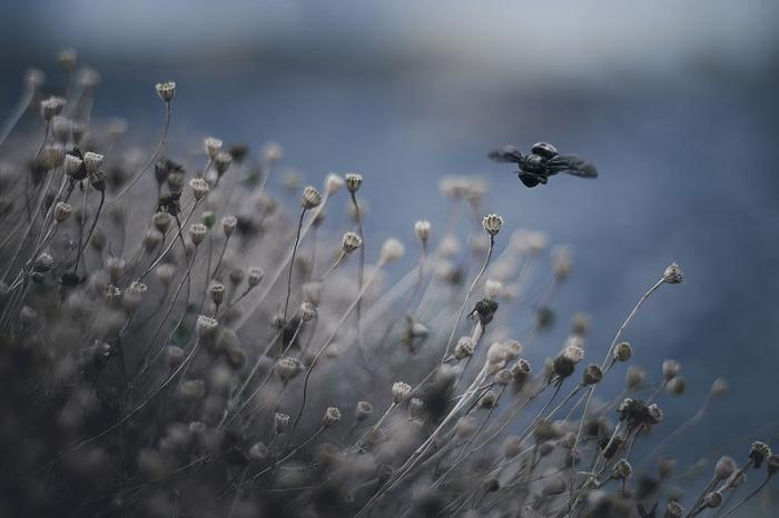 Воздушные фотографии от Рэйчел Беллински (27 фото)