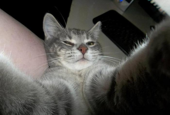 Коты и их селфи снимки 20 фото