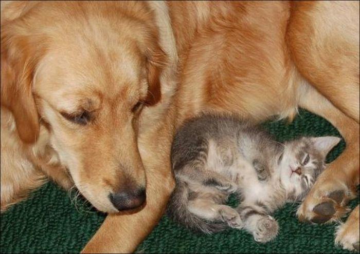 Pas i mačka (44 fotografije)