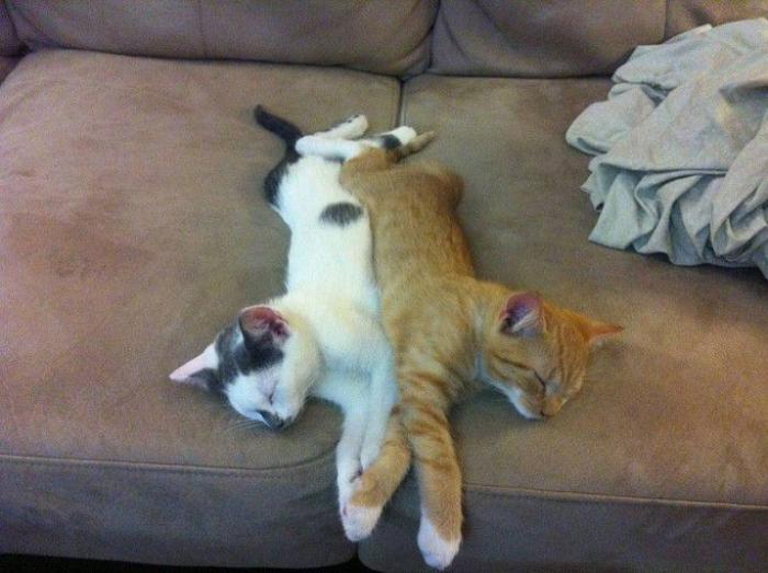 Mačke spavaju na čudnim mjestima (27 fotografija)