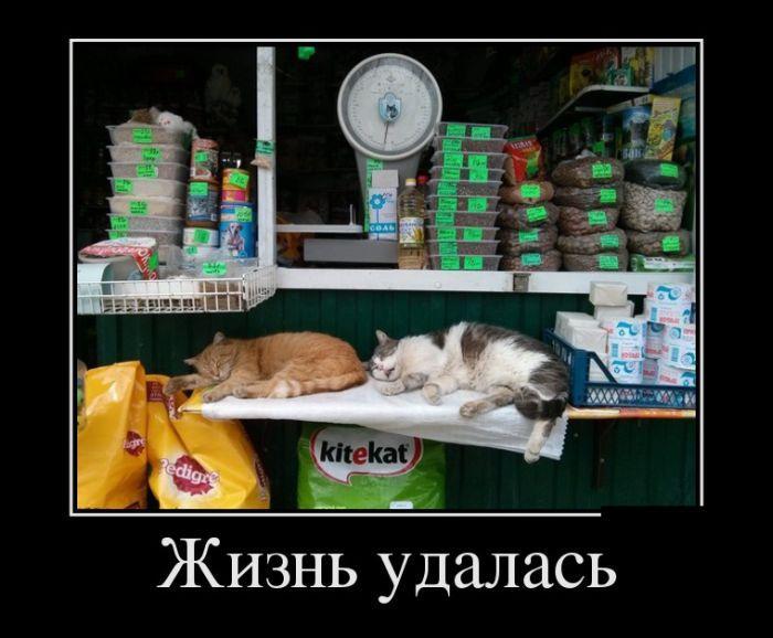 Демотиваторы №819 (30 фото)