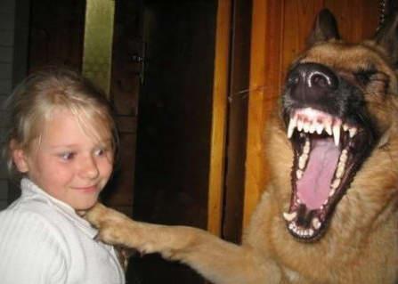 Смешные животные (50 фото)