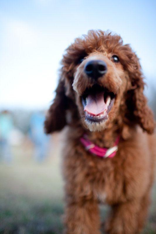 Животные, которые научат нас быть счастливыми (47 фото)