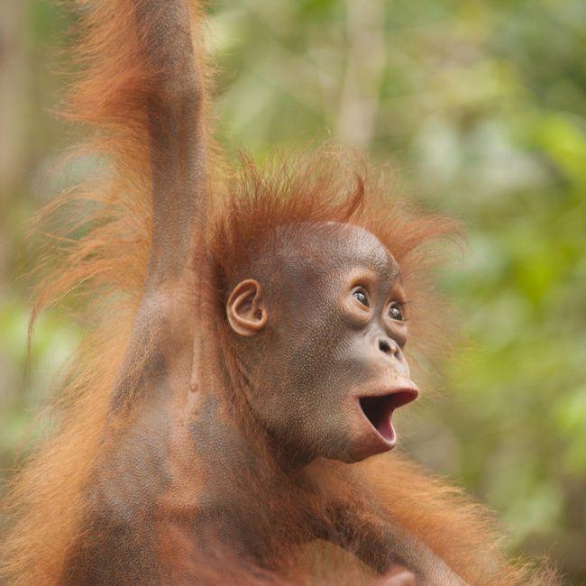 Iznenađene životinje (20 fotografija)