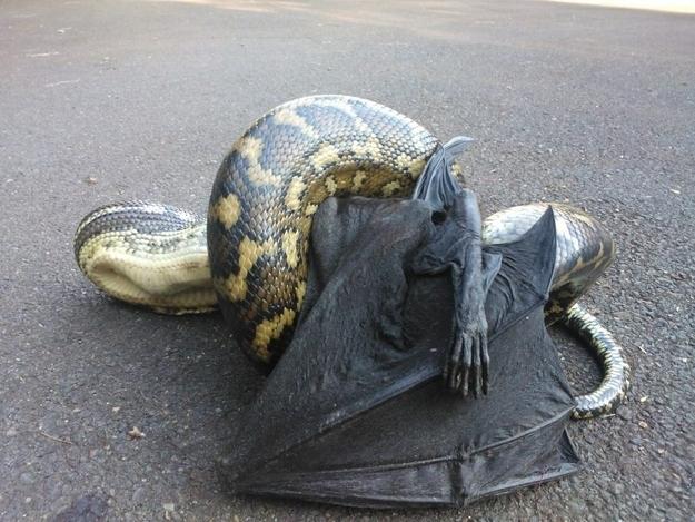 Шокирующие фотографии животного мира