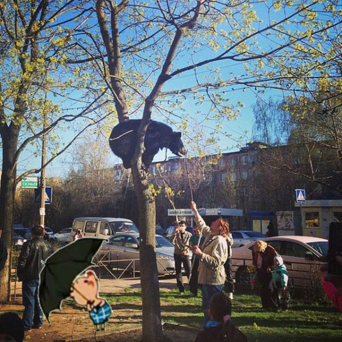 единственное учебное во фрязино медведь на дереве внимание