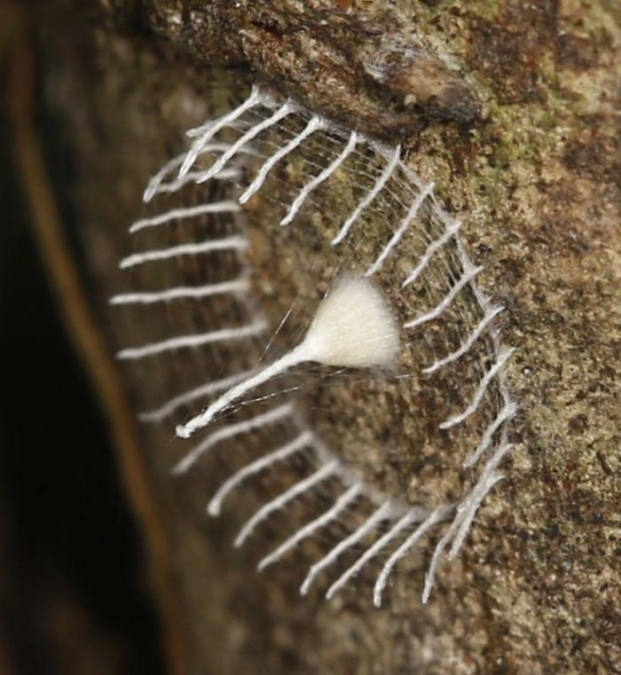 Бабочка - строит заборы (6 фото)