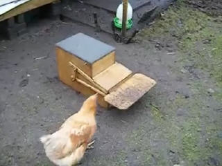 Автокормушки для кур своими руками