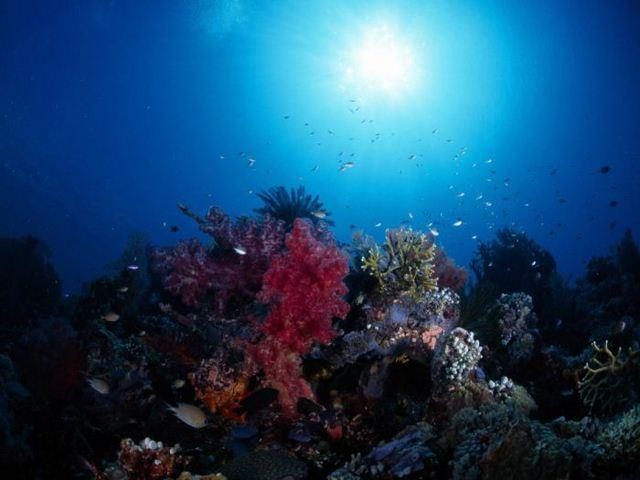 Зачаровывающий подводный мир 100 фото