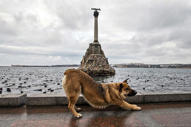 Город Севастополь находится на юго-западе Крымского