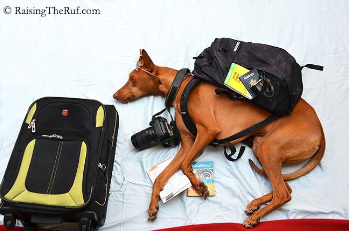 Веселые приключения пса во время сна (10 фото)
