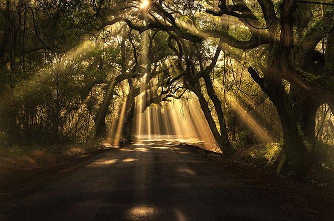 Самые красивые деревья в мире 19 фото