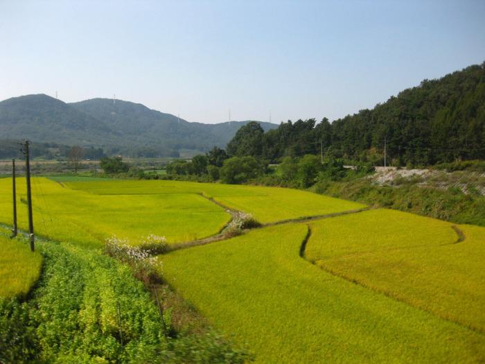знакомства в северной корее