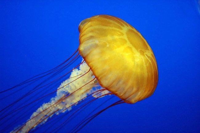 15 шокирующих фактов об океане, которых вы не знали (15 фото)