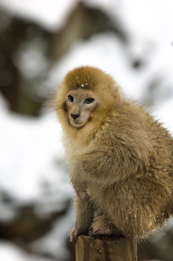 Забавные коллажи обезьянок и котят (12 фото)