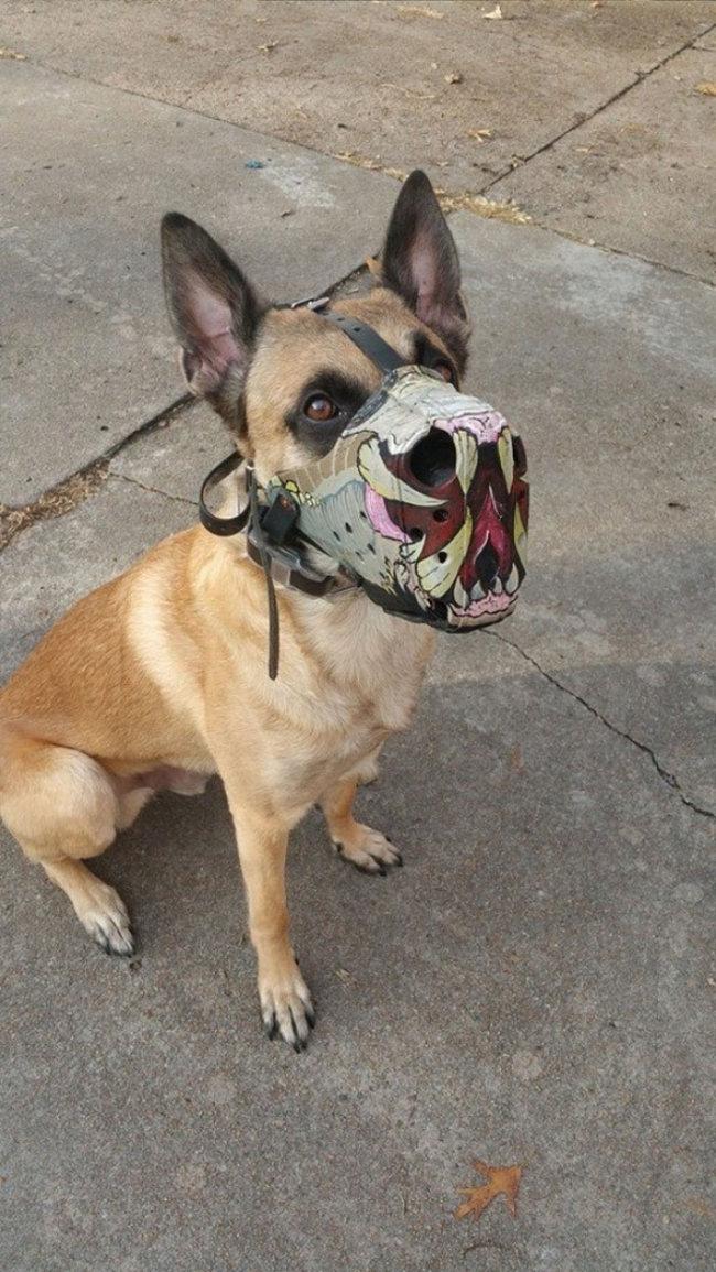 Ekskluzivne brnjice za pse (18 fotografija)
