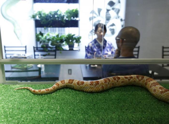Кафе со змеями в Японии (10 фото)