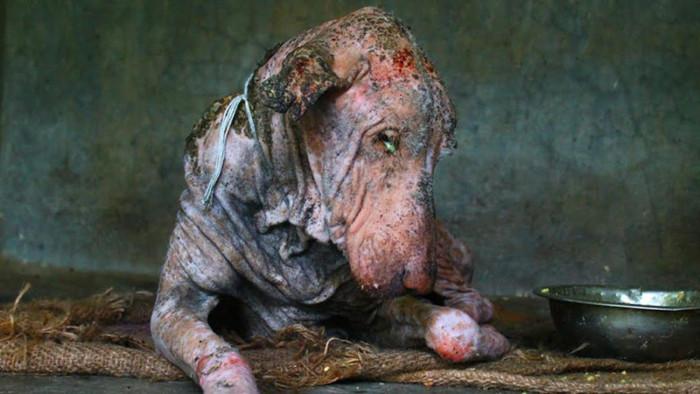 Удивительная история спасения несчастной собаки (2 фото)