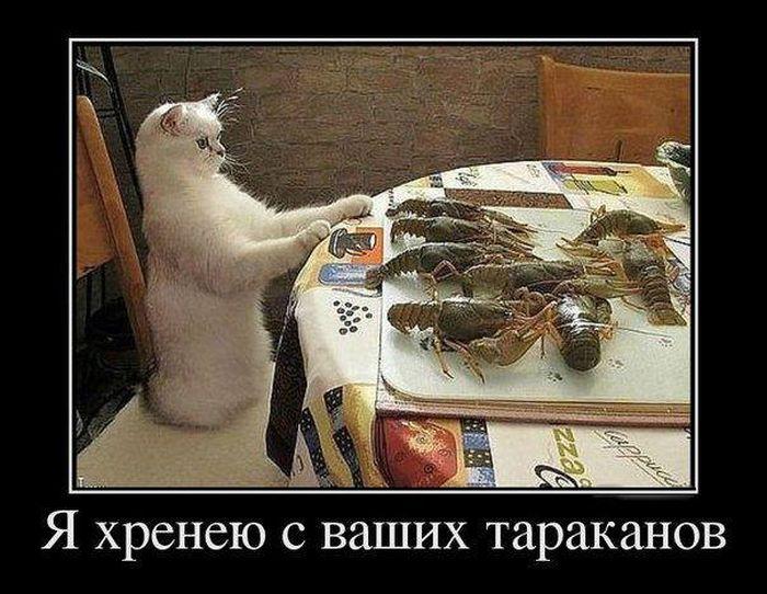 Россия решила не уничтожать запрещенные турецкие продукты - Цензор.НЕТ 3139