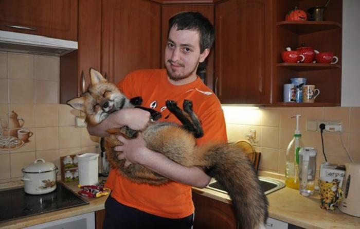 Парень купил лису на меховой ферме, чтобы спасти от гибели (10 фото)