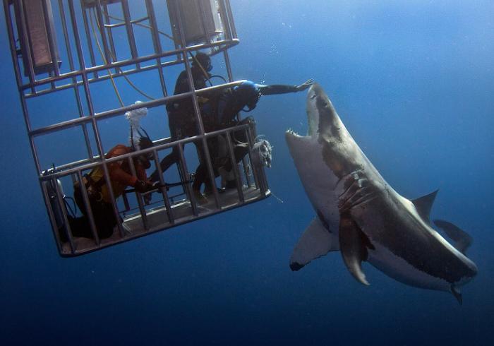 Как потрогать акулу (8 фото)