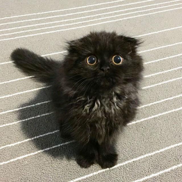 Удивленный черный кот