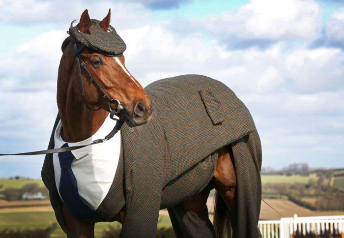 Я маленькая лошадка - pikabu ru